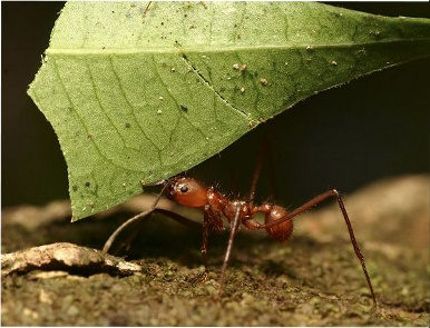 Ants can lift up to 100 times their own weight.